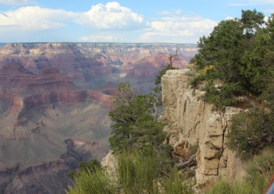 Grand Canyon National Parc - La végétation s'accroche aux parois abruptes