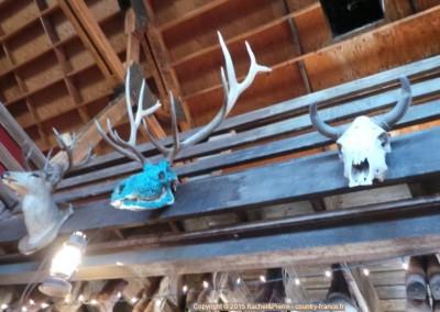 Trophées de chasse dans le Saloon de Goldfield