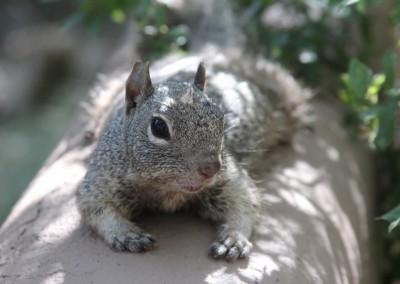 Un écureuil pas trop farouche.