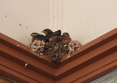 Bisbee - Une petite ville tranquille... pour les oiseaux aussi !