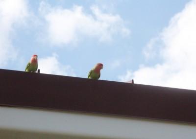 Le Musée des Trains de Scottsdale. Des perroquets !